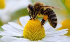 Científicos logran crear primera abeja robótica capaz de polinizar artificialmente
