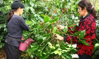 Colombia producirá 18 millones de sacos de café con acciones del Gobierno
