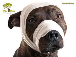 Campañas Educativas para prevenir el Maltrato Animal