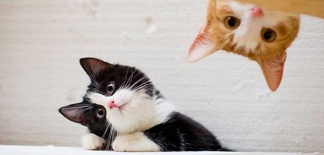 Líbano estrena hogar de paso para los gatos