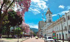 Se talarán 66 árboles que representan riesgo en Ibagué.