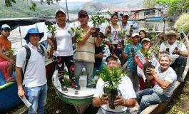 Cortolima a sembrado 70 mil árboles en el departamento
