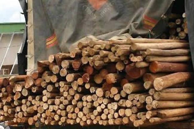 """En el Tolima ya no habrá más escenarios artísticos o de """"Corralejas"""" hechos con madera de bosque natural"""